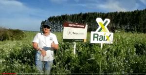 Mix 210 – A revolução em adubação Verde.